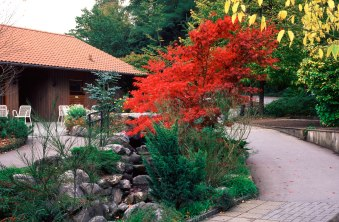giardino con acero